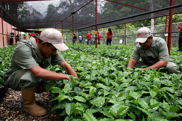 Resultado de imagen para zona agricolas del estado Vargas