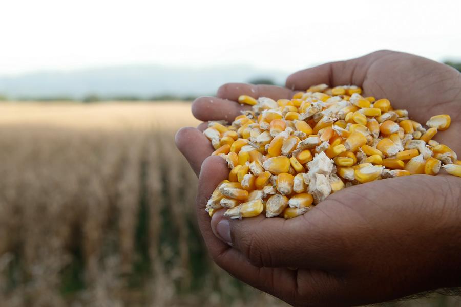 Firma presidente venezolano creación de consorcio Agrosur